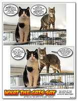 What The Cats Say 1301