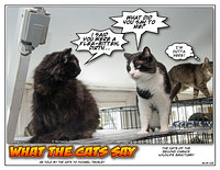 What The Cats Say 1302