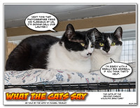 What The Cats Say 1303