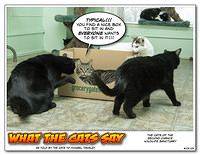 What The Cats Say 1304