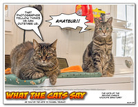 What The Cats Say 1305